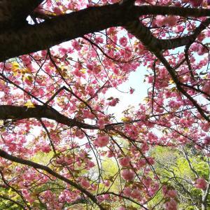 花桃の咲く公園へ