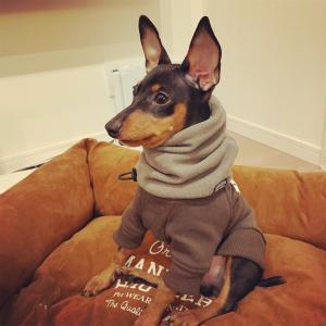 オシャレな犬服を紹介(主観)