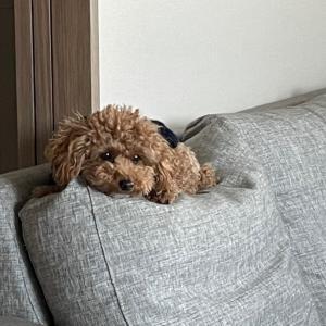 【1泊2日】犬旅@近江八幡