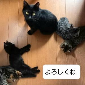 母猫と子猫を保護しました