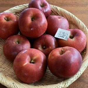秋のお楽しみ、紅玉リンゴ大好き!