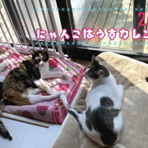 やっと福猫小町オープンですー!と幻の猫の菜月