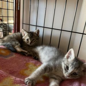 子猫と子猫と子猫と成猫とばたばた。。とご支援お願い