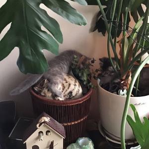 春の子猫たちすべて里親さん決定!