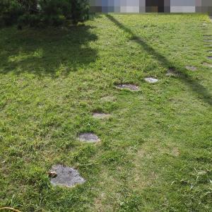 庭の草刈りやってみた