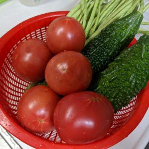 夏野菜が獲れ過ぎて困っています。(;^_^A