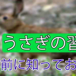 【うさぎの行動と習性】野生との違いは?「飼う前に知っておきたい」