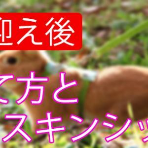【お迎え後】うさぎの育て方&スキンシップ「トイレ・爪切り・病気」