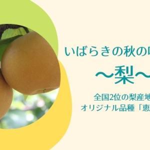 茨城の梨のおすすめ品種と直売所を紹介!梨狩り体験でも秋の味覚を堪能