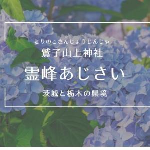 【鷲子山上神社のあじさい】2021年の見頃時期・御朱印・アクセス情報