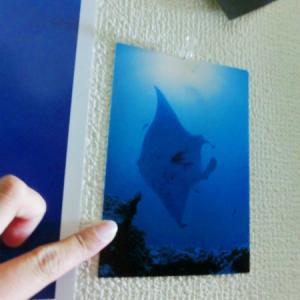 【和歌山】スキューバダイビングのライセンス取得検定