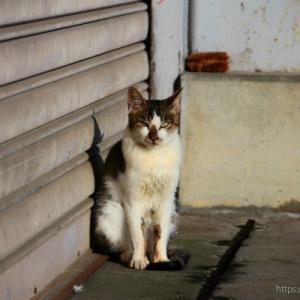 【沖島】猫×風景編<一人旅>
