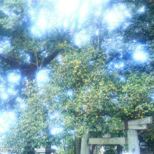 【京都】北野天満宮<trippiece/京都3社寺カメラ散歩ツアー>