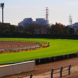 【芝とダート】競馬に興味がある初心者が押さえておきたい話!vol.2