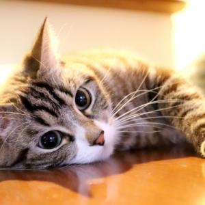 ネコを飼ってみたい人のためにお伝えする、ネコを飼って良かったこと