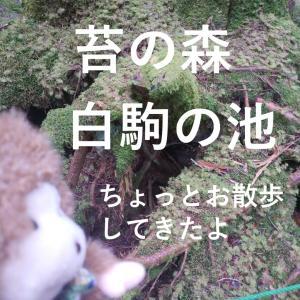 苔の森「白駒池」をゆく。池に行かずにお散歩するなの