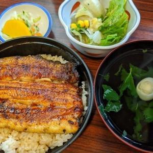 【蒲田ランチ】暑い日には鰻を食すべし 寿々喜蒲焼店