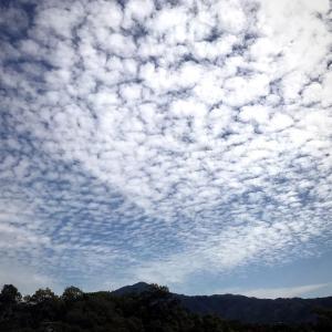 うろこ雲、イワシ雲、羊雲の秋、三日以内に大雨?