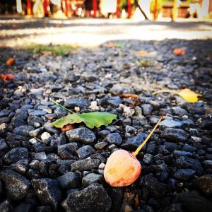 京都の秋、豊国神社にて、後ろは京都大仏殿
