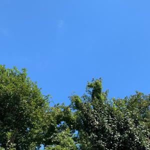 ハゲ山の様に切りまくられた木々
