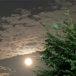11月の最後に満月