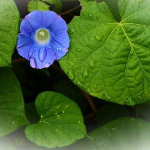 路傍に咲く小さな花たち そして、温室のサガリバナ