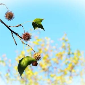 四季のある日本が好き♪ 今、木の実が可愛い