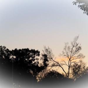 大阪城公園から大川沿いへ  ハクセキレイ カワセミ カモメ etc