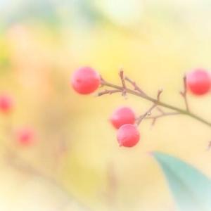 セカイは春を待っている♪ ナンテン ツクバネガキ~~キュウリグサ ユキヤナギ モクレイシ