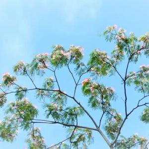 合歓 捩花 向日葵 夏の花咲く散歩道🌻  🦋ベニシジミ ツバメシジミ  🐞19紋紅型ナミテントウ
