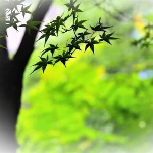 今日も猛暑日🌞 小さな秋のカケラを見つけたくて歩きました 👟 👟  ヨメナ オミナエシ コムラサキ   =ii= 🦋
