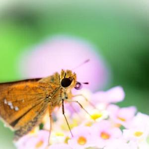 夏の終わりのクイズです~😊 この花何の花? オケラ カラスビシャク ボタンヅル