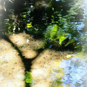 水鏡 季のうつろひ 映しゆく🌀 ブーゲンビリア カタバミ コナスビ ヒガンバナ コムラサキ