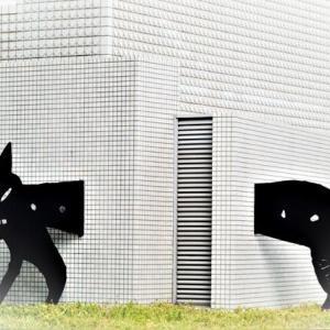 壁抜け猫さんに会いに行きながら~🐈(=^・^=) メリケンムグラ タカサブロウ ヤブマメ ヒナタノイノコヅチ