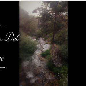 松の森 La Boca Del Asno (ラ ボカ デル アスノ) ― スペイン素敵な山歩き。Madridから日帰り編