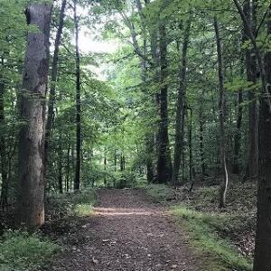 森と湖の散歩