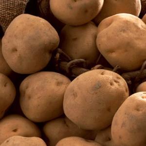 ジャガイモの収穫とステップ事件
