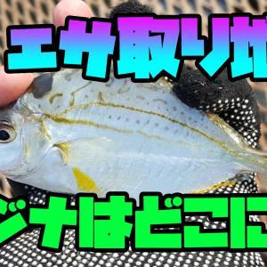 ウキフカセ釣りで豆アジが大漁・・・エサ取り対策法