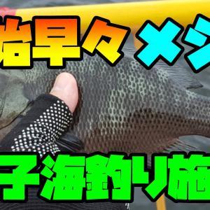 開始早々にメジナを2尾【磯子海釣り施設】
