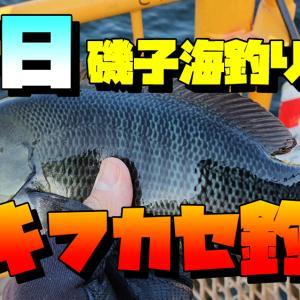 がらがらの平日にウキフカセ釣り:メジナ