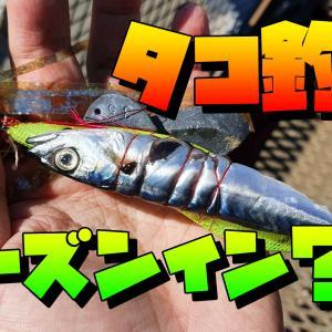 ついにタコ釣りシーズンイン!?磯子海釣り施設でタコ釣りしてみた!!