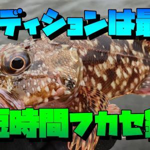 コンディションは最高!?短時間ウキフカセ釣り:神奈川