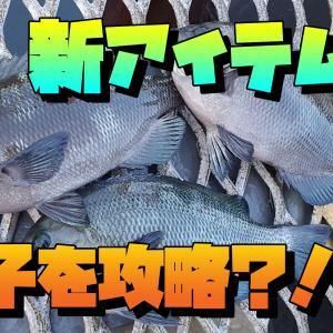 新アイテムで磯子を攻略?!ウキフカセ釣り 横浜