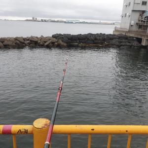 雨天のタコ釣りにおすすめのタコエギ!!磯子のタコポイントは?