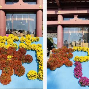 笠間稲荷神社の菊まつり