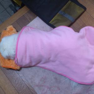 #131 玄関で、行き倒れる様に寝ているパオパオ君