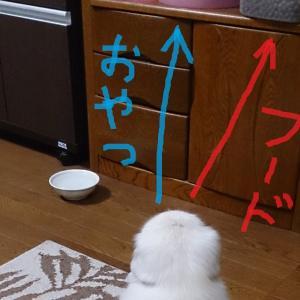 #206  ペキちゃんにとって恵方!?おやつ置場の方向を向いて座るパオパオ君