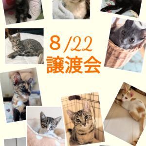 明日譲渡会 みんな幸せになぁ〜れ!