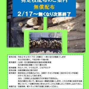 【薪材無料配布】名古屋市港区 ホルトノキ・トウカエデ・ニセアカシア伐採木を無償配布(無くなり次第終了)
