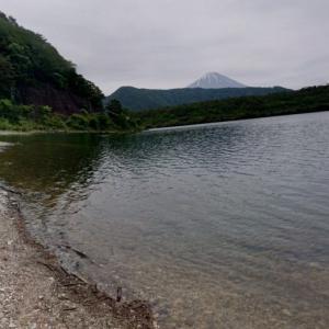 【湖岸の流木】山梨県南都留郡富士河口湖町西湖 富士山を望む静かな湖畔に流れ着いた小枝流木